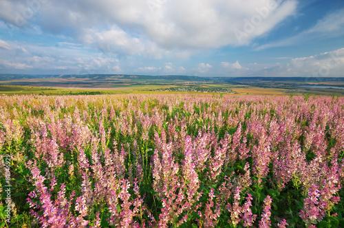 Fototapeta Spring meadow obraz na płótnie