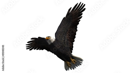 Poster Aigle Bald Eagle in fly separated on white background