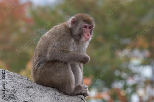 Foto op Plexiglas Aap обезьяна