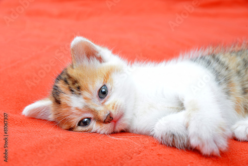 Little cat lying on a red blanket