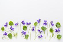 Viola Flowers On Art Canvas