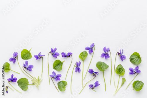 Fotografie, Obraz  viola flowers on art canvas