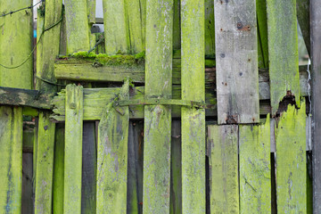Light green wood planks vintage or grunge texture