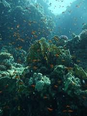 Fototapeta Woda Krople Fische im Wasser 2