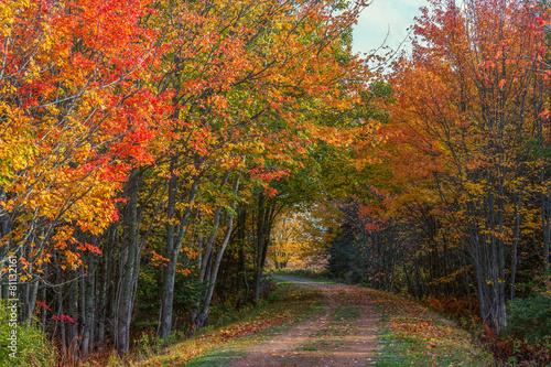 lesny-szlak-na-wyspie-ksiecia-edwarda
