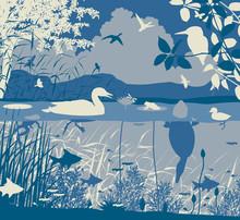 Freshwater Wildlife