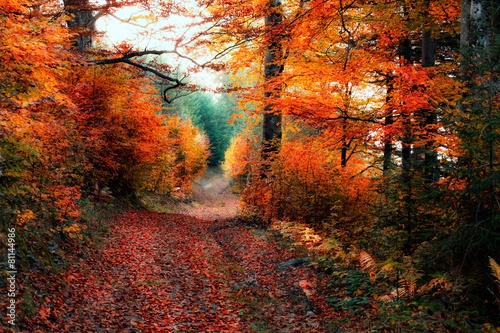 Garden Poster Brown Old autumn forest