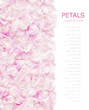 Pink rose petals isolated on white background