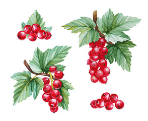 Plakat Watercolor illustrations of red currants