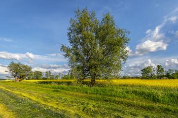 Obraz na Szkle Wiejski Krajobraz wiejski, pola uprawne