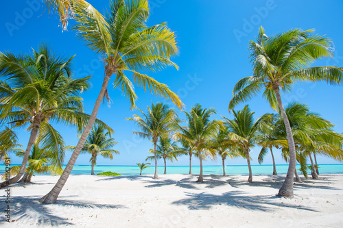 Photo  Idyllic tropical beach with palm trees