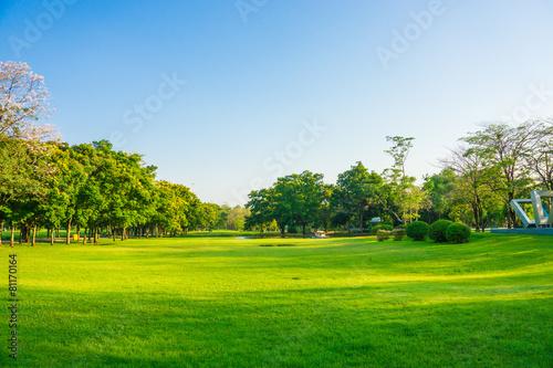 Foto op Plexiglas Landschappen Green field park sunny day