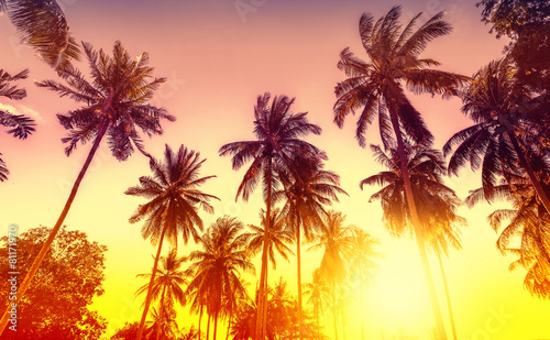 Foto auf AluDibond Palms Golden sunset, nature background with palms.