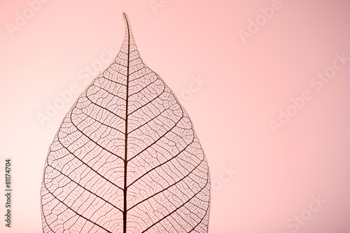 Poster Decorative skeleton leaves Skeleton leaf on pink background, close up
