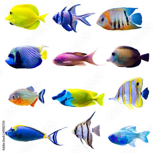 Fotografía  Colección de peces tropicales