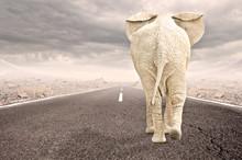 Elephant Walking To The Horizon On Asphalt Road