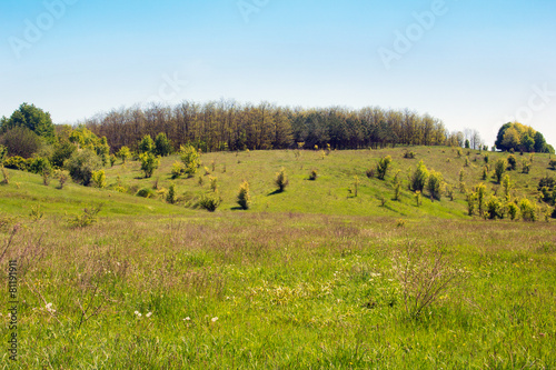 Fototapety, obrazy: landscape of a grassy valley, hills with trees and sky