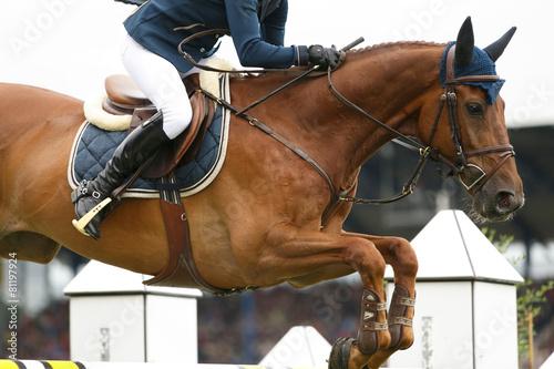 Spoed Foto op Canvas Paardrijden Fuchs über dem Sprung