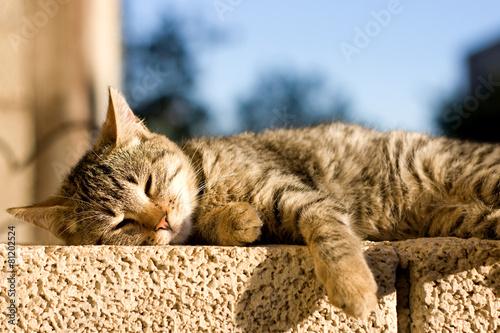plakat Młode brązowy pręgowany kot śpi na ścianie. Selektywne fokus.