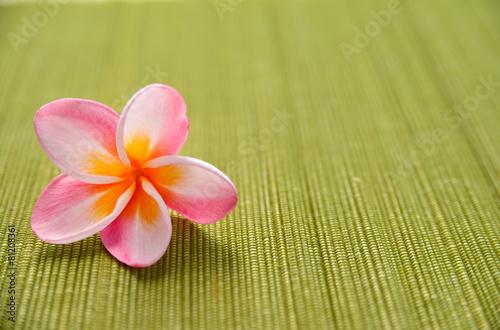 Pink frangipani flower on green mat