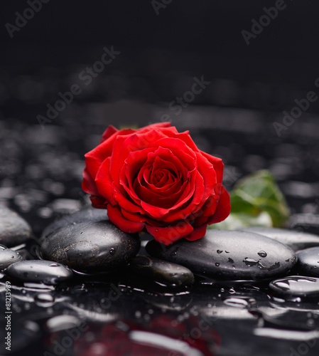 Spoed Fotobehang Spa red rose and therapy stones
