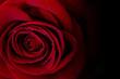 canvas print picture - rosa rossa, rosa, rosso