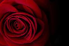 Rosa Rossa, Rosa, Rosso