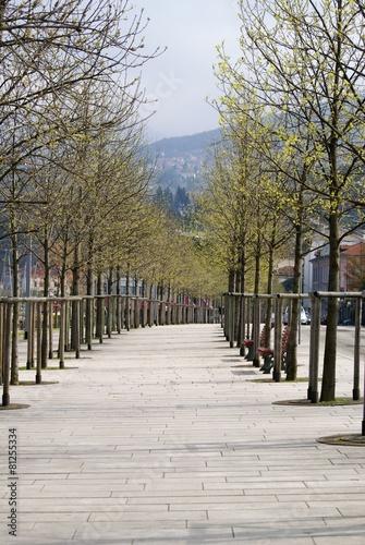 Fotografie, Obraz  italian boulevard