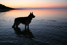 The Dog In The Evening Lake