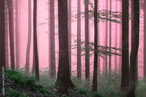 dreamy-purple-color-foggy-woods