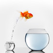 canvas print picture - Gold fish jumping to big fishbowl