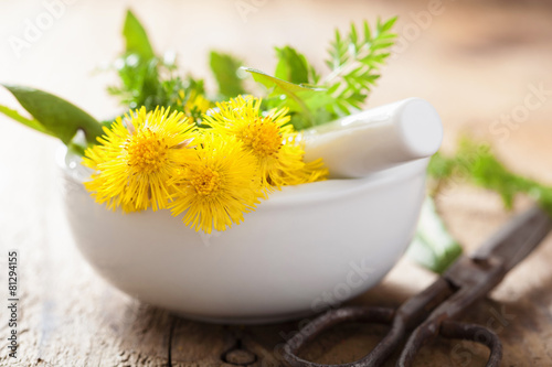 Valokuva  coltsfoot flowers spring herbs in mortar