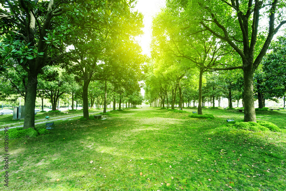 footpath and trees in park