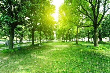 Fototapeta na wymiar footpath and trees in park