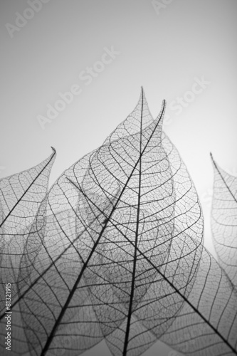 Tuinposter Decoratief nervenblad Skeleton leaves on grey background, close up