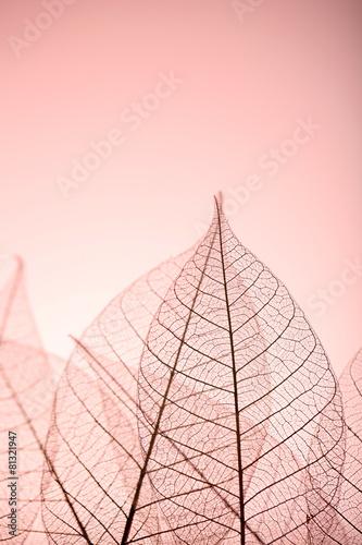 Poster Squelette décoratif de lame Skeleton leaves on pink background, close up