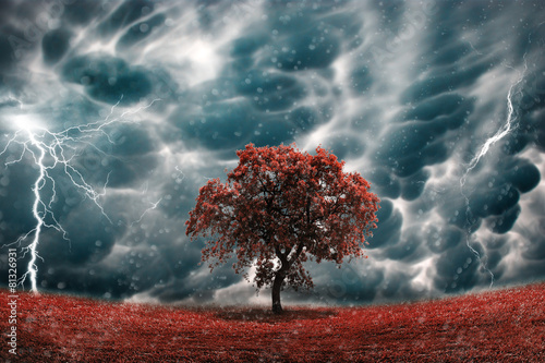Canvas Prints Storm Stormy tree landscape