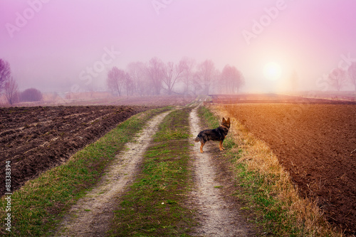 Spoed Foto op Canvas Purper Autumn foggy rural landscape with dog