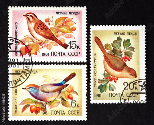 Photographie  series of stamps printed in USSR, shows song birds, 1981