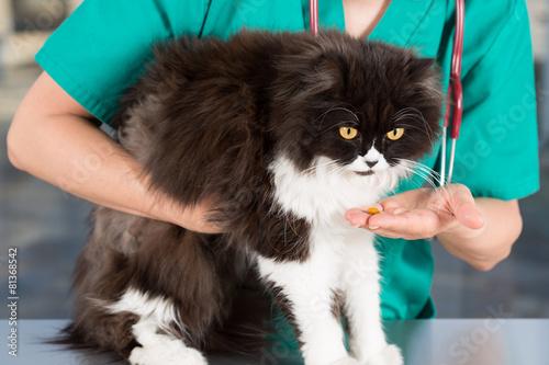 Photo sur Toile Croquis dessinés à la main des animaux Persian cat eating