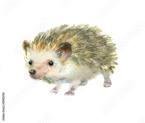 watercolor-little-hedgehog
