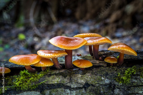 Photo  Flammulina - edible mushrooms