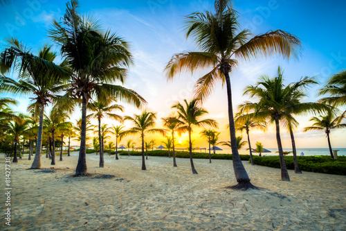 Foto op Plexiglas Caraïben isole caraibiche di polinesia con palme e tramonto