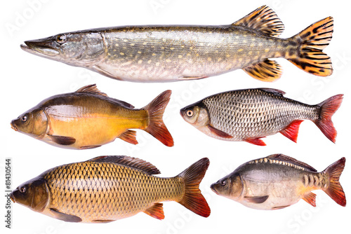Fényképezés  Set fresh raw fish isolated,  clipping path