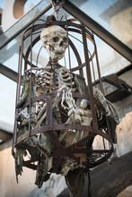 Human Skeleton Steel Cage For ...