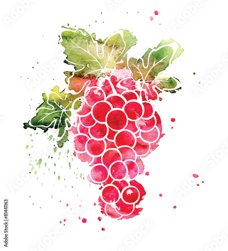 Watercolor illustration - grapes Fototapete