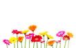 canvas print picture - bunte Blumen freigestellt