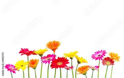 Foto op Aluminium Gerbera bunte Blumen freigestellt