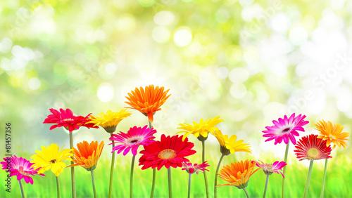 Deurstickers Geel Natur Blumen
