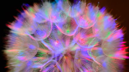 Panel Szklany Współczesny Colorful Pastel Background - vivid abstract dandelion flower